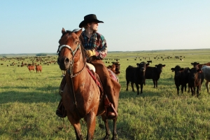 Black Leg Ranch cowboy rounding up cattle
